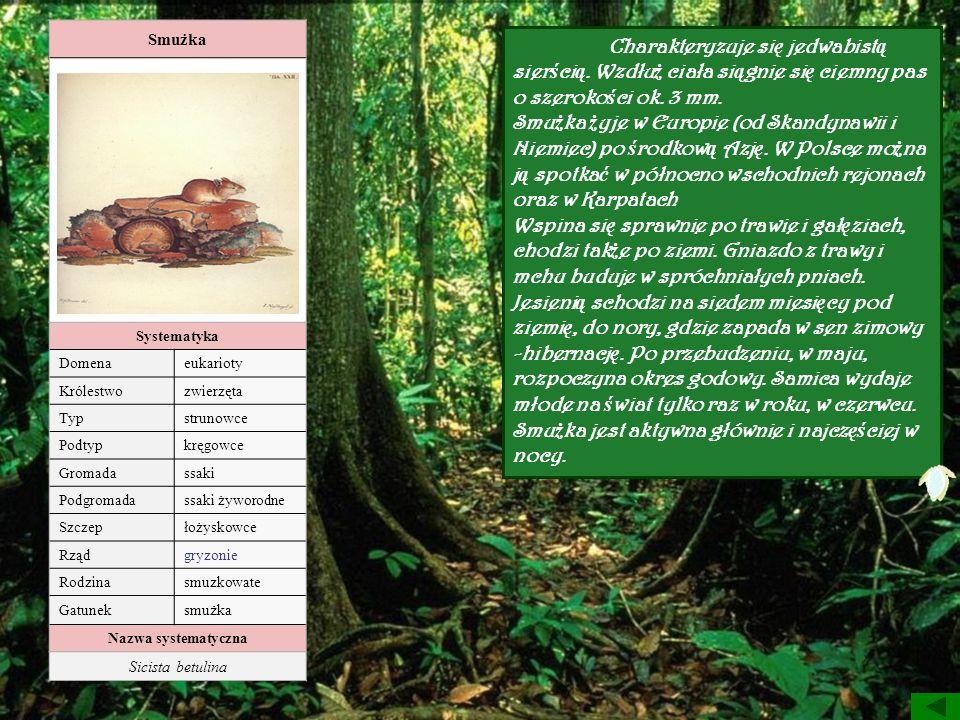 Smużka Systematyka. Domena. eukarioty. Królestwo. zwierzęta. Typ. strunowce. Podtyp. kręgowce.