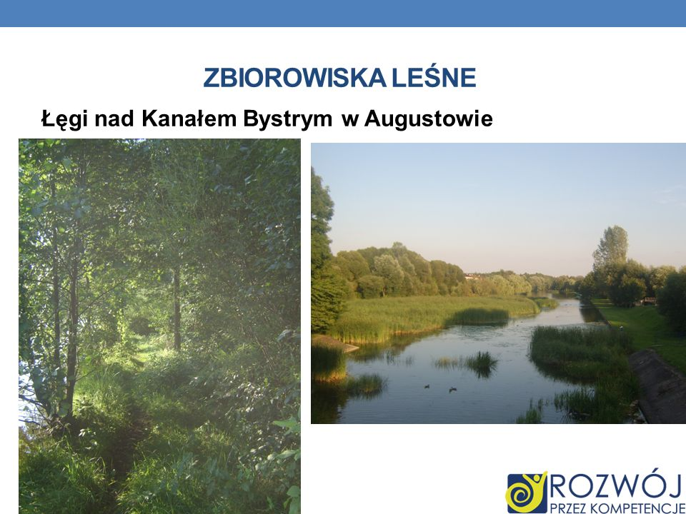 Zbiorowiska leśne Łęgi nad Kanałem Bystrym w Augustowie