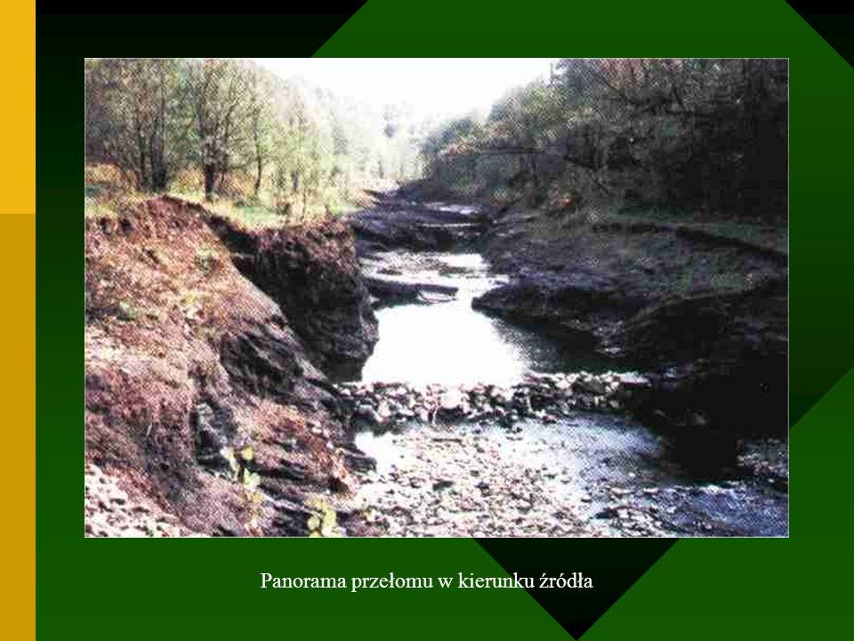 Panorama przełomu w kierunku źródła