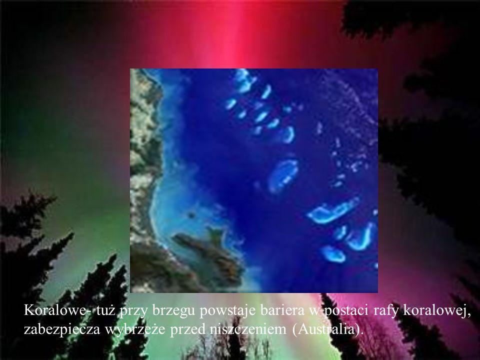 Koralowe- tuż przy brzegu powstaje bariera w postaci rafy koralowej, zabezpiecza wybrzeże przed niszczeniem (Australia).