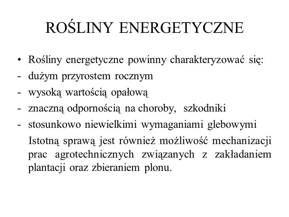 ROŚLINY ENERGETYCZNE Rośliny energetyczne powinny charakteryzować się: