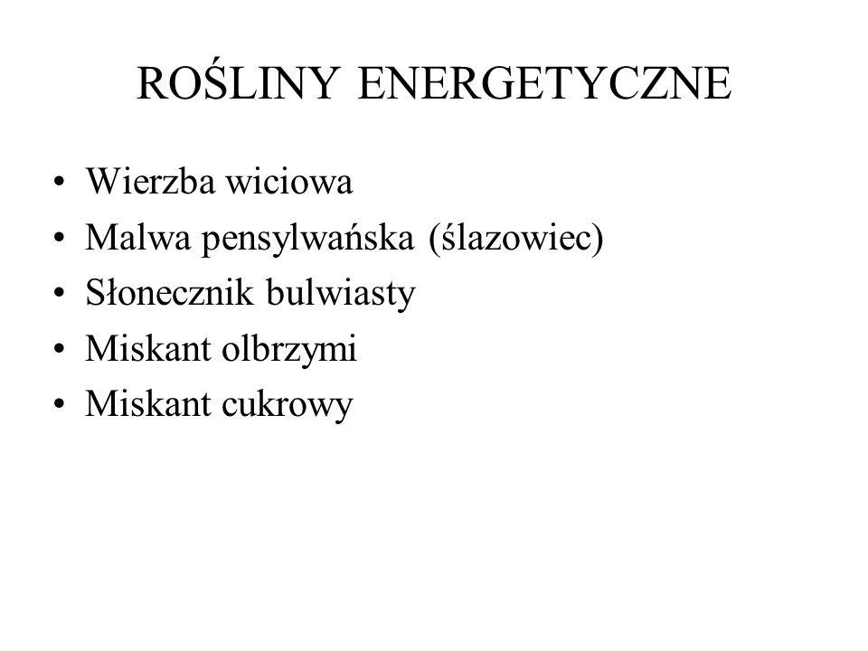 ROŚLINY ENERGETYCZNE Wierzba wiciowa Malwa pensylwańska (ślazowiec)