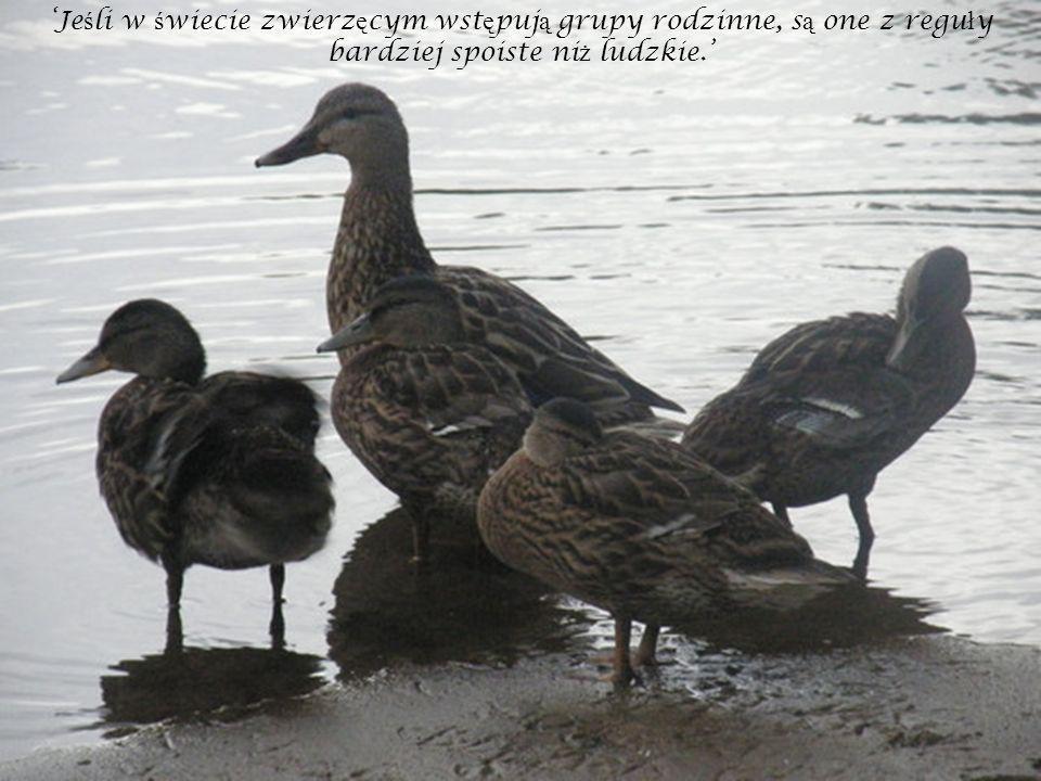 'Jeśli w świecie zwierzęcym wstępują grupy rodzinne, są one z reguły bardziej spoiste niż ludzkie.'