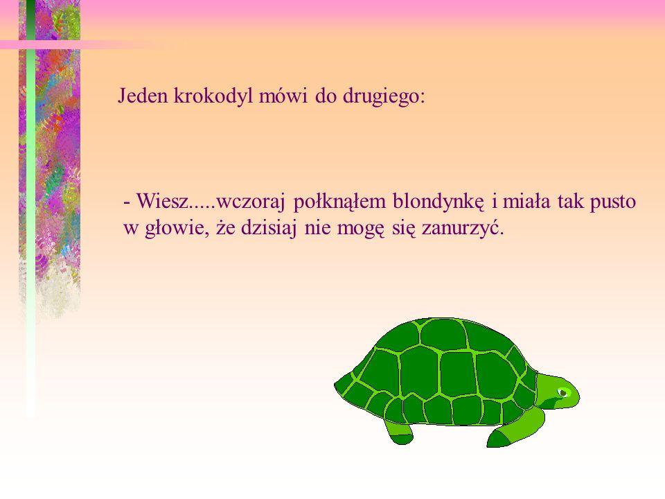 Jeden krokodyl mówi do drugiego: