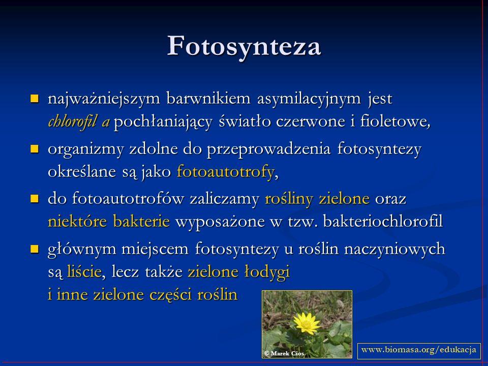 Fotosynteza najważniejszym barwnikiem asymilacyjnym jest chlorofil a pochłaniający światło czerwone i fioletowe,