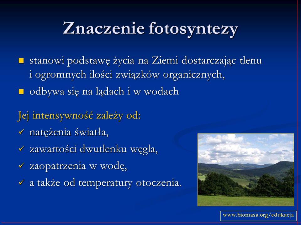 Znaczenie fotosyntezy