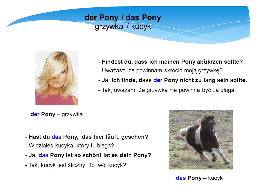 der Pony / das Pony grzywka / kucyk