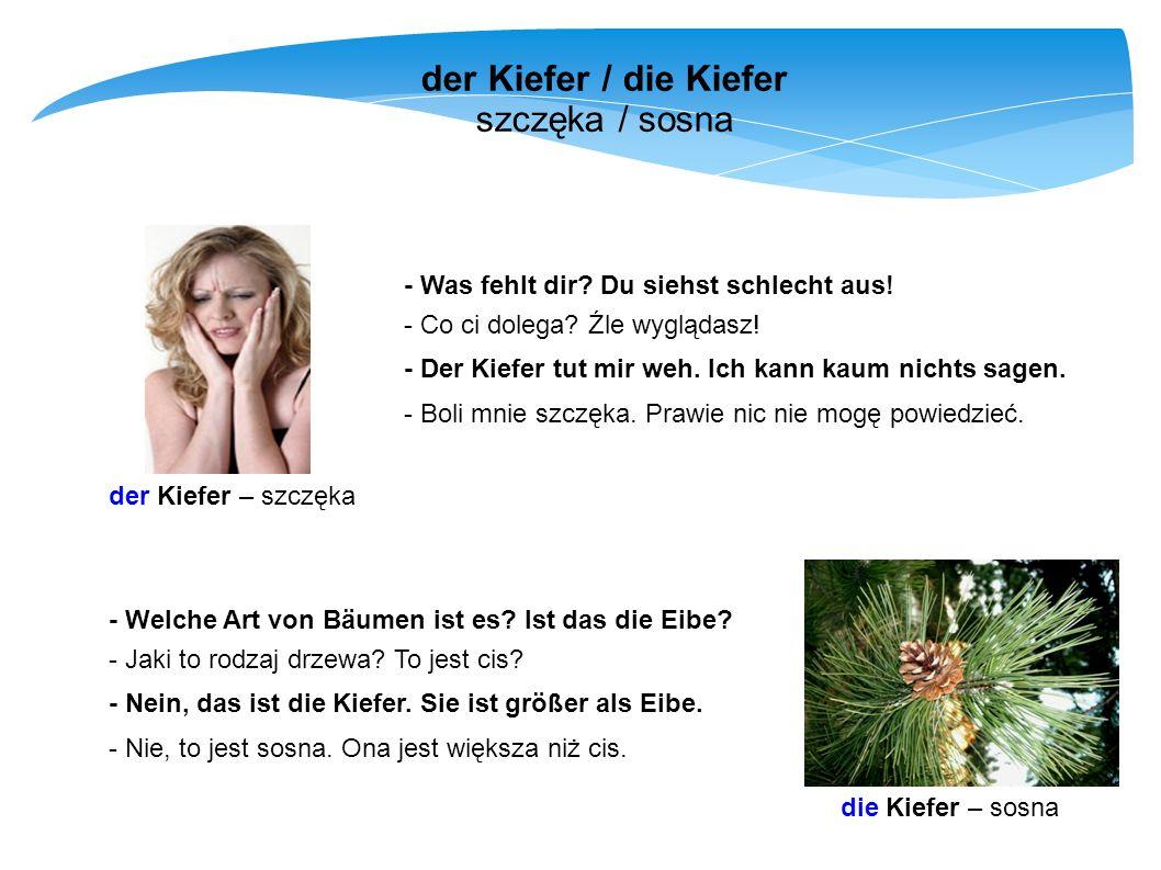 der Kiefer / die Kiefer szczęka / sosna