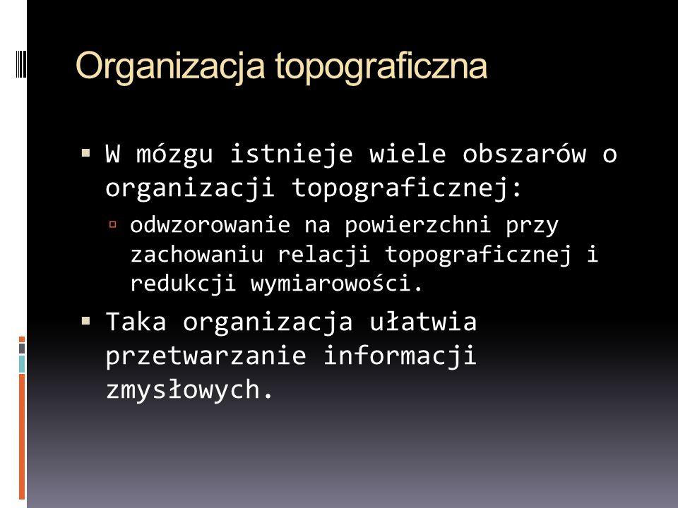 Organizacja topograficzna