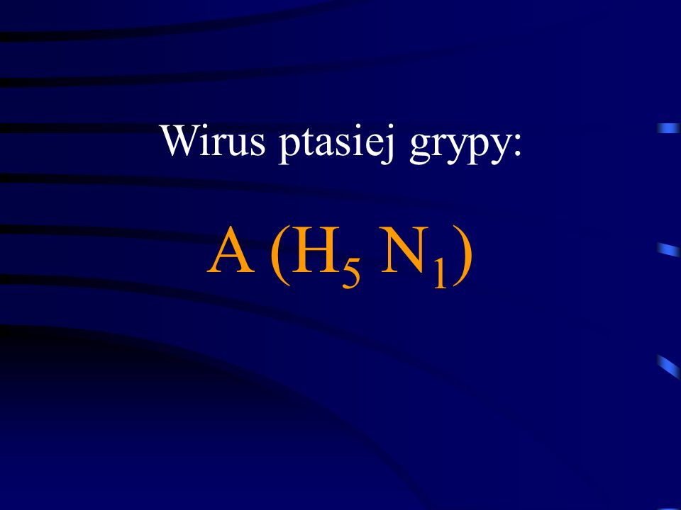 Wirus ptasiej grypy: A (H5 N1)