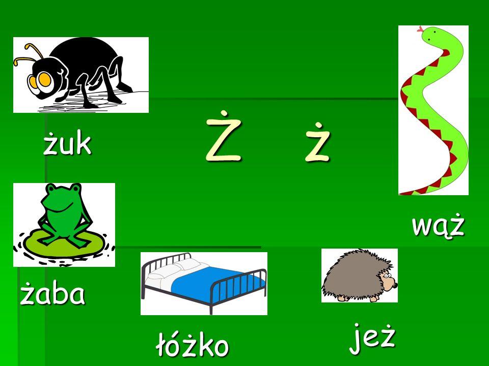 Ż ż żuk wąż żaba jeż łóżko
