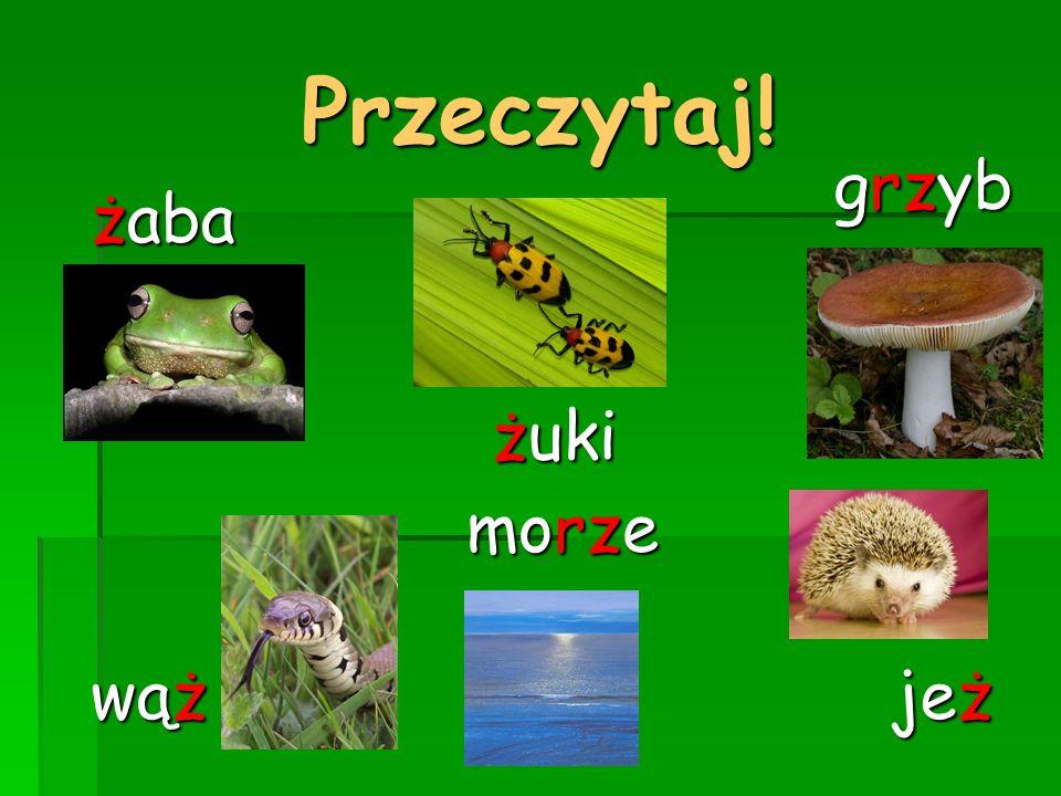 Przeczytaj! grzyb żaba żuki morze wąż jeż