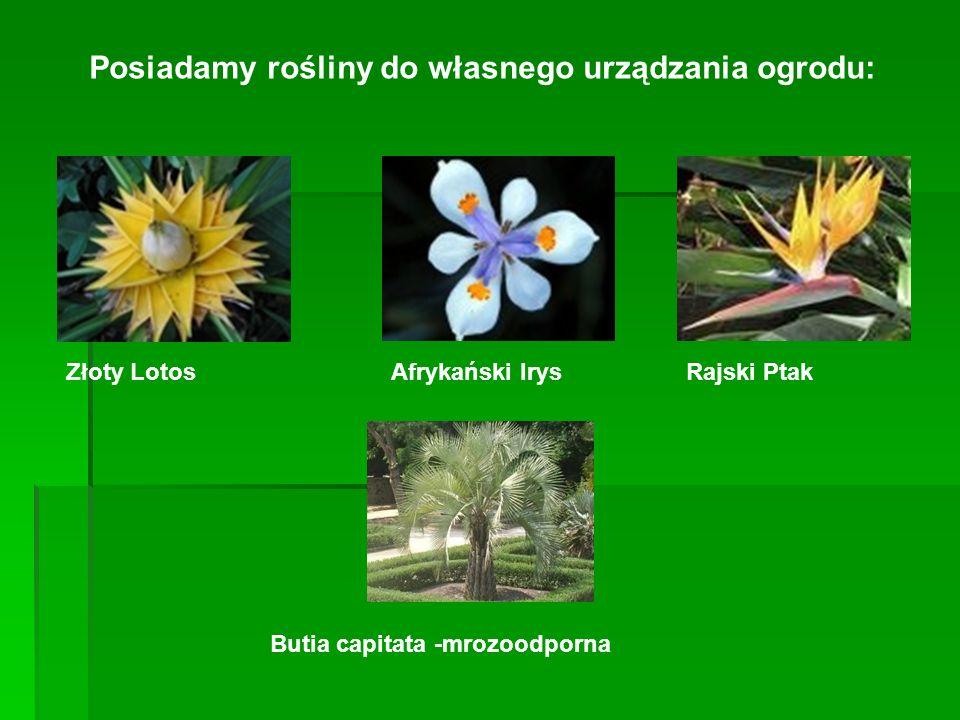 Posiadamy rośliny do własnego urządzania ogrodu: