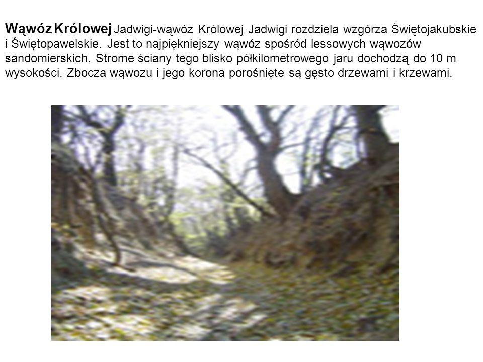 Wąwóz Królowej Jadwigi-wąwóz Królowej Jadwigi rozdziela wzgórza Świętojakubskie i Świętopawelskie.