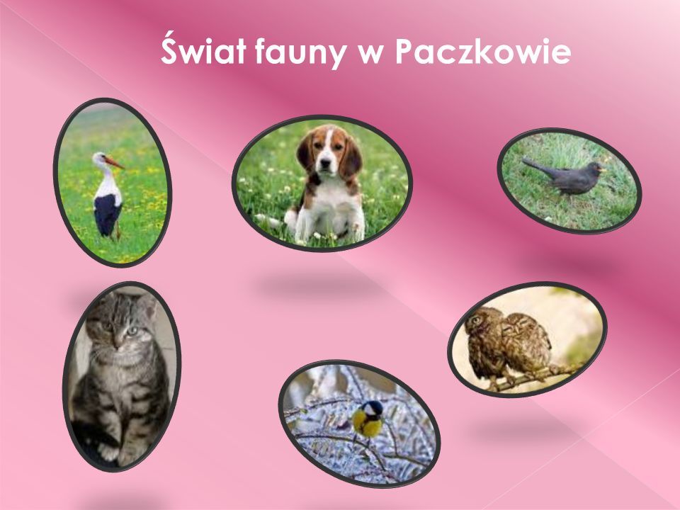 Świat fauny w Paczkowie