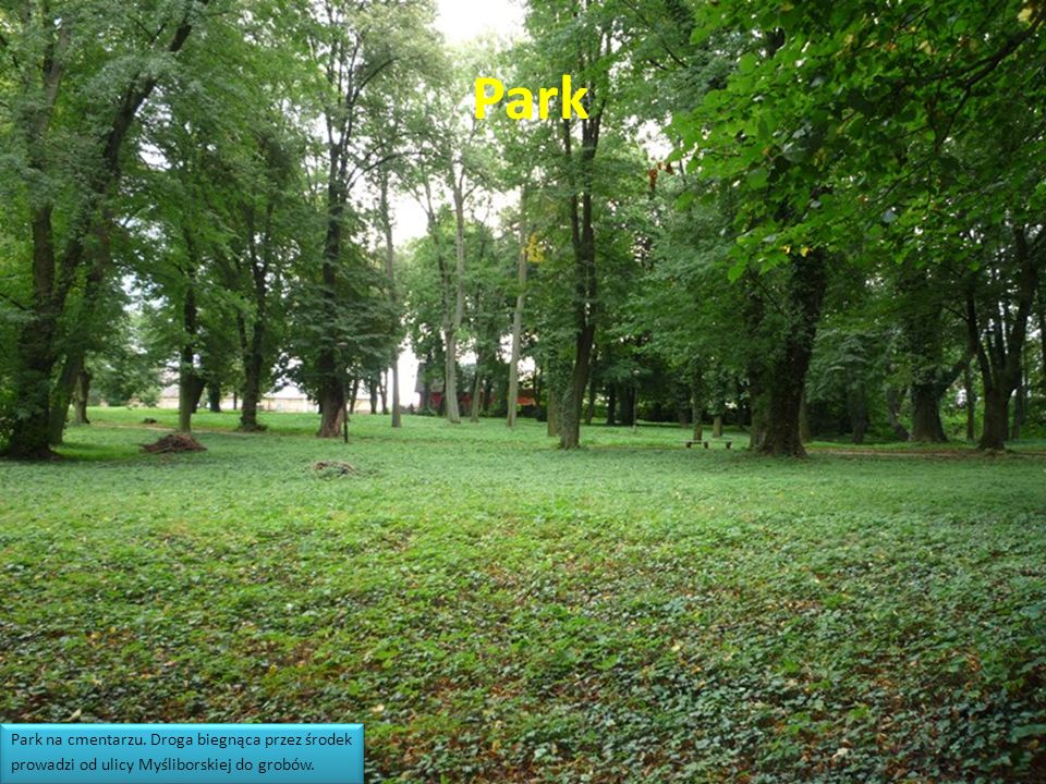 Park Park na cmentarzu. Droga biegnąca przez środek prowadzi od ulicy Myśliborskiej do grobów.