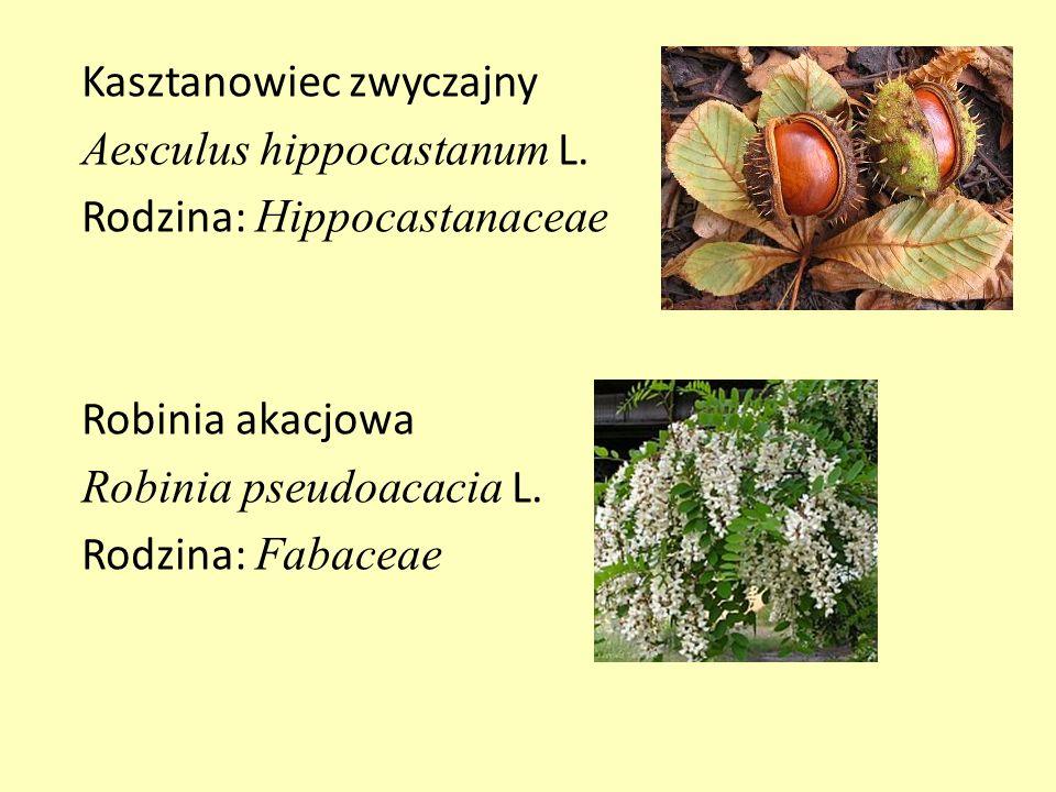 Kasztanowiec zwyczajny Aesculus hippocastanum L