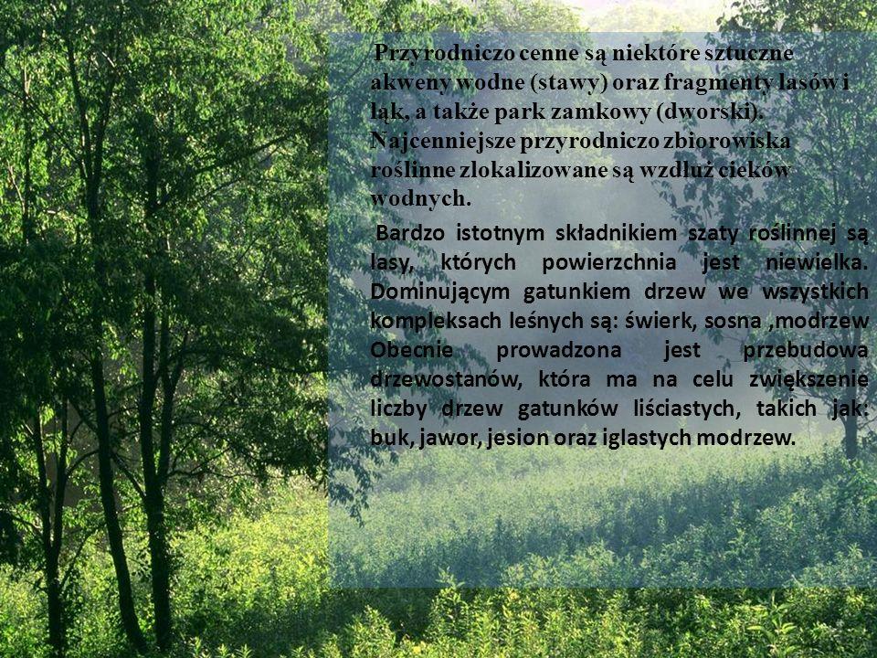 Przyrodniczo cenne są niektóre sztuczne akweny wodne (stawy) oraz fragmenty lasów i łąk, a także park zamkowy (dworski). Najcenniejsze przyrodniczo zbiorowiska roślinne zlokalizowane są wzdłuż cieków wodnych.