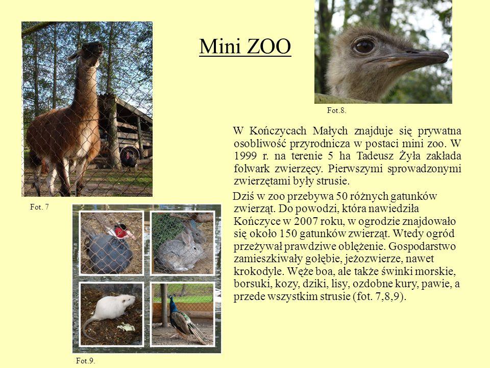 Mini ZOO Fot.8.