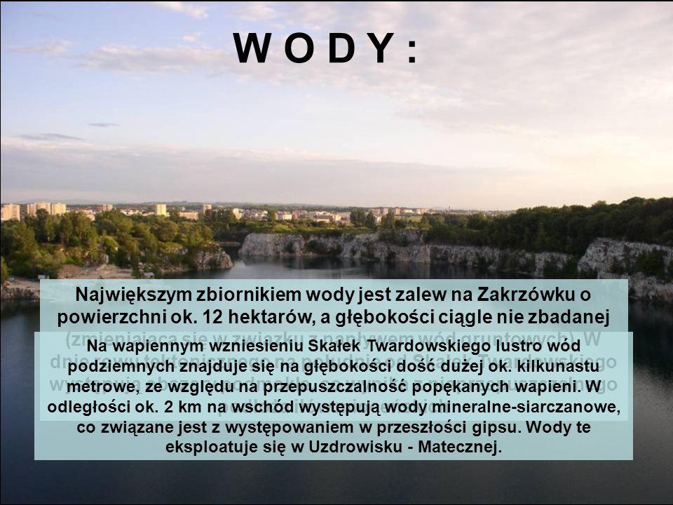 W O D Y :