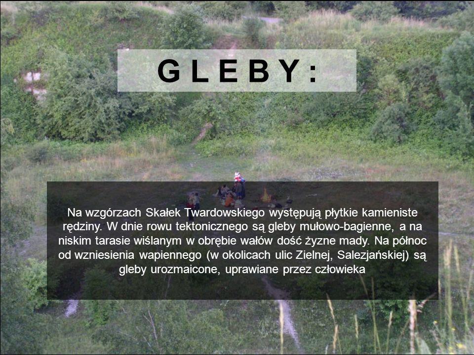 G L E B Y :