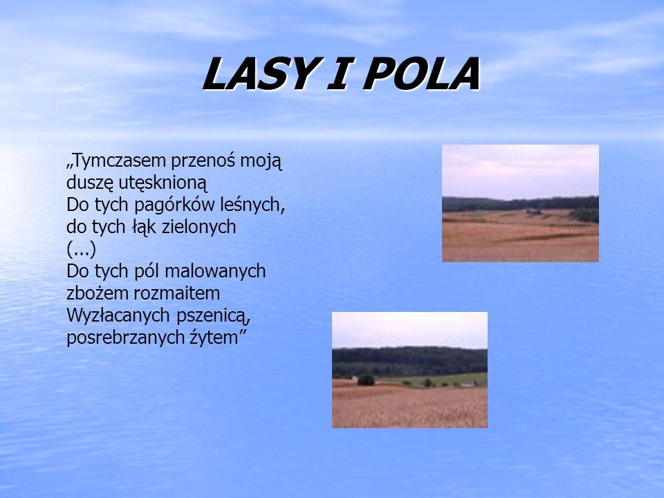 LASY I POLA