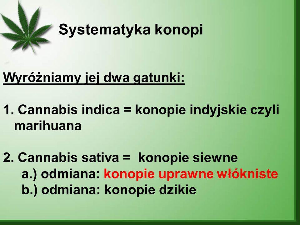Systematyka konopi Wyróżniamy jej dwa gatunki: