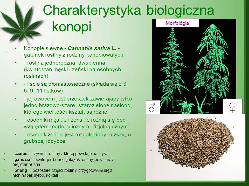 Charakterystyka biologiczna konopi