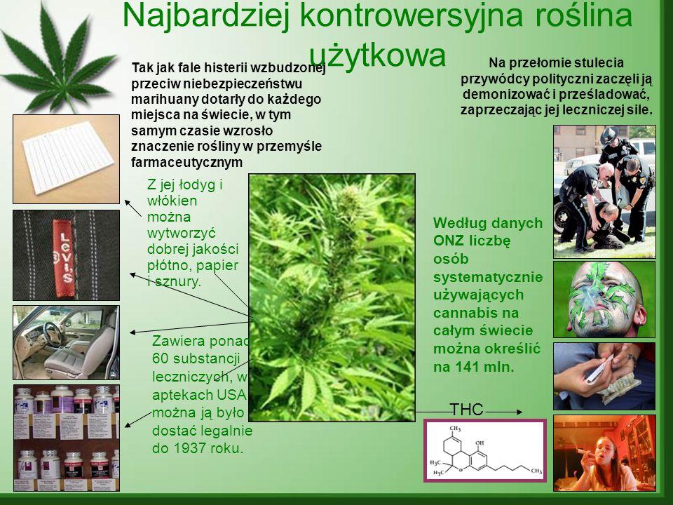 Najbardziej kontrowersyjna roślina użytkowa