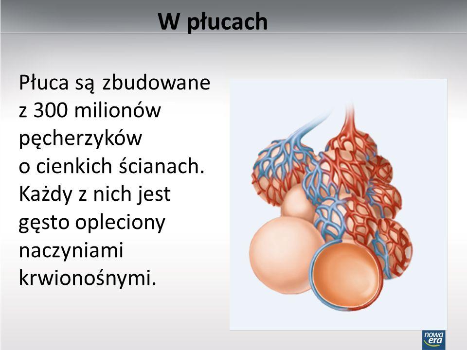 W płucach Płuca są zbudowane