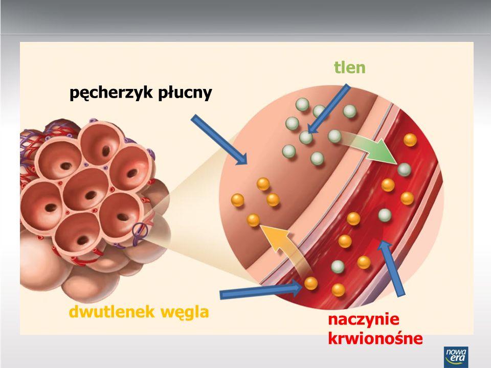 tlen pęcherzyk płucny dwutlenek węgla naczynie krwionośne