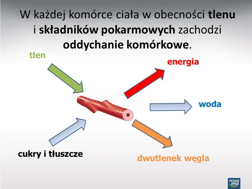 W każdej komórce ciała w obecności tlenu i składników pokarmowych zachodzi