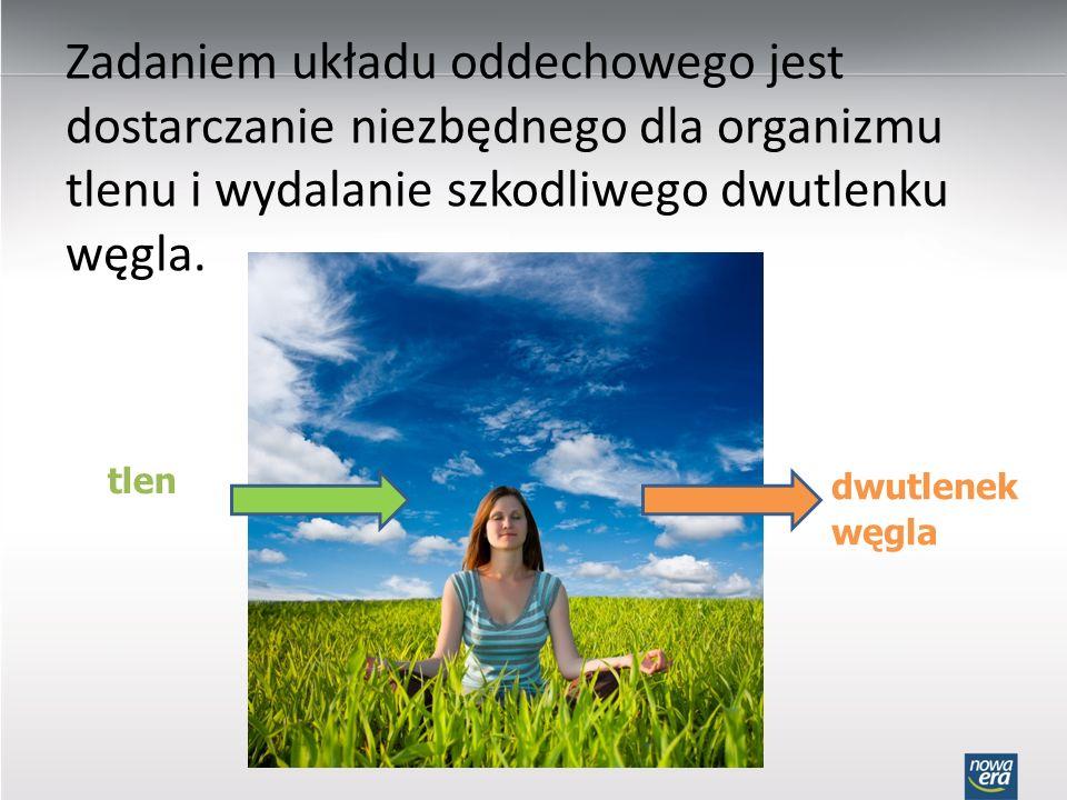 Zadaniem układu oddechowego jest dostarczanie niezbędnego dla organizmu tlenu i wydalanie szkodliwego dwutlenku węgla.