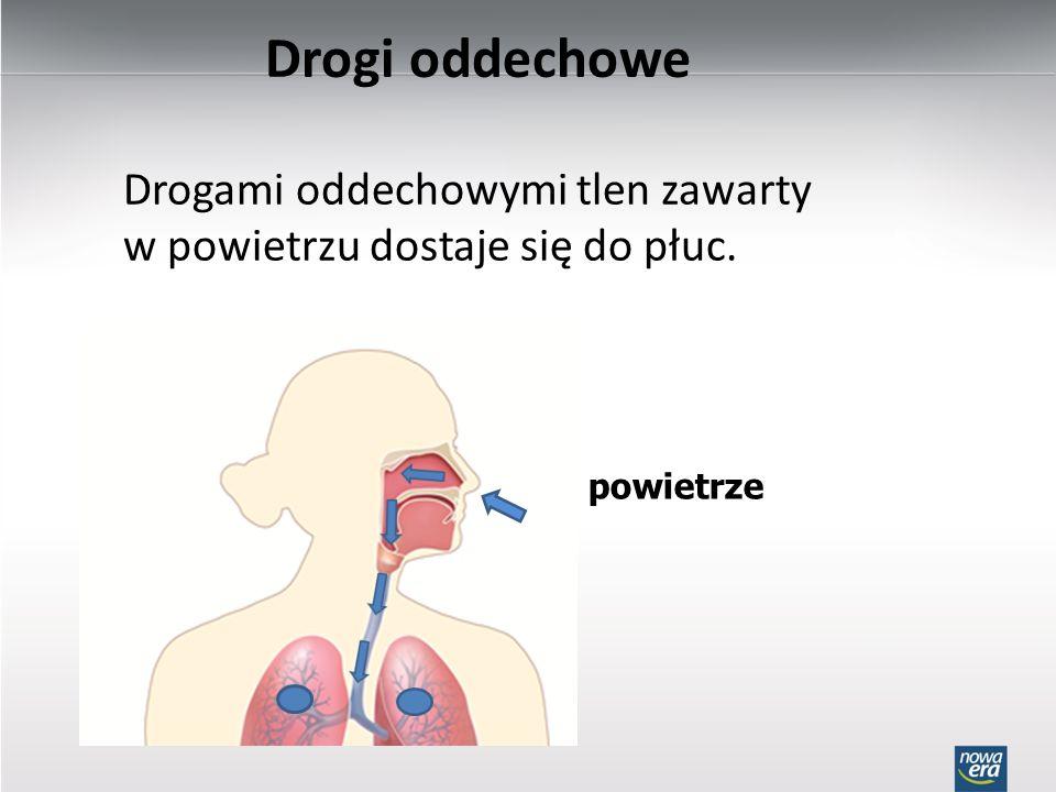 Drogi oddechowe Drogami oddechowymi tlen zawarty w powietrzu dostaje się do płuc. powietrze