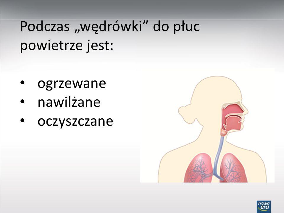"""Podczas """"wędrówki do płuc powietrze jest:"""