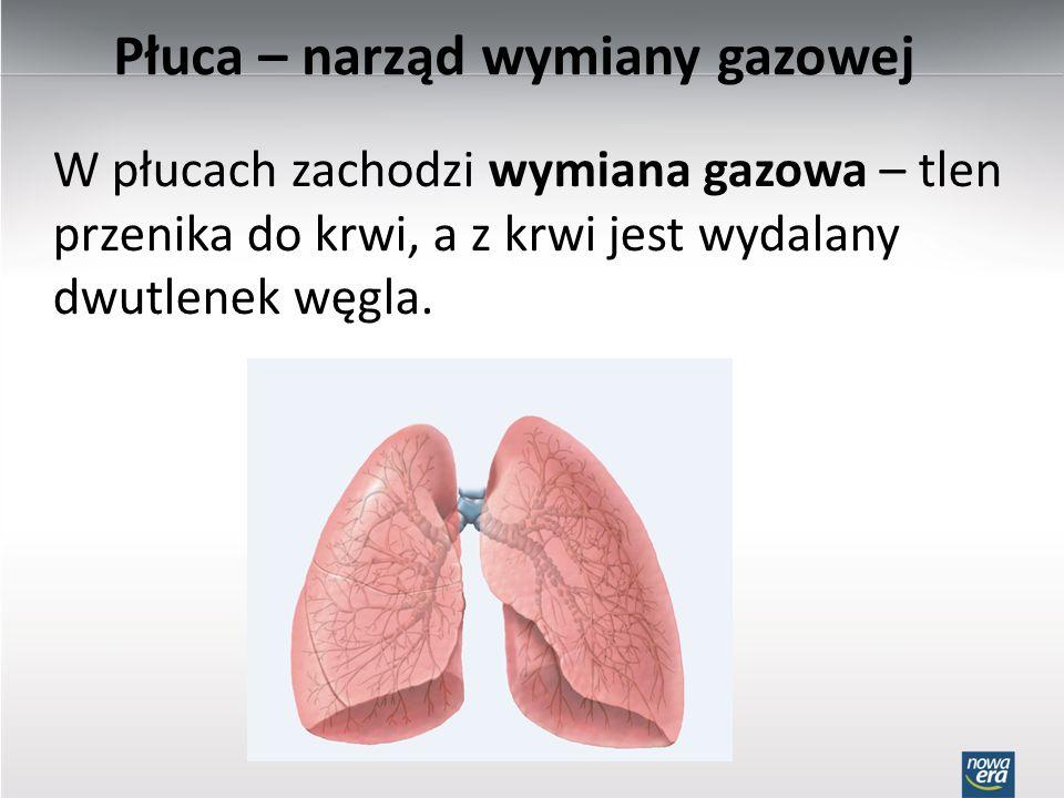 Płuca – narząd wymiany gazowej