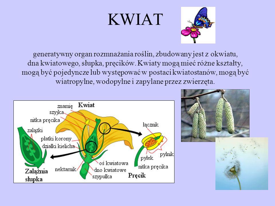 KWIAT generatywny organ rozmnażania roślin, zbudowany jest z okwiatu, dna kwiatowego, słupka, pręcików.