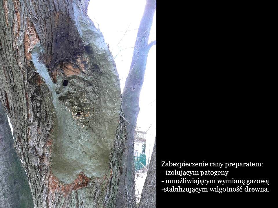 Zabezpieczenie rany preparatem: - izolującym patogeny - umożliwiającym wymianę gazową -stabilizującym wilgotność drewna.