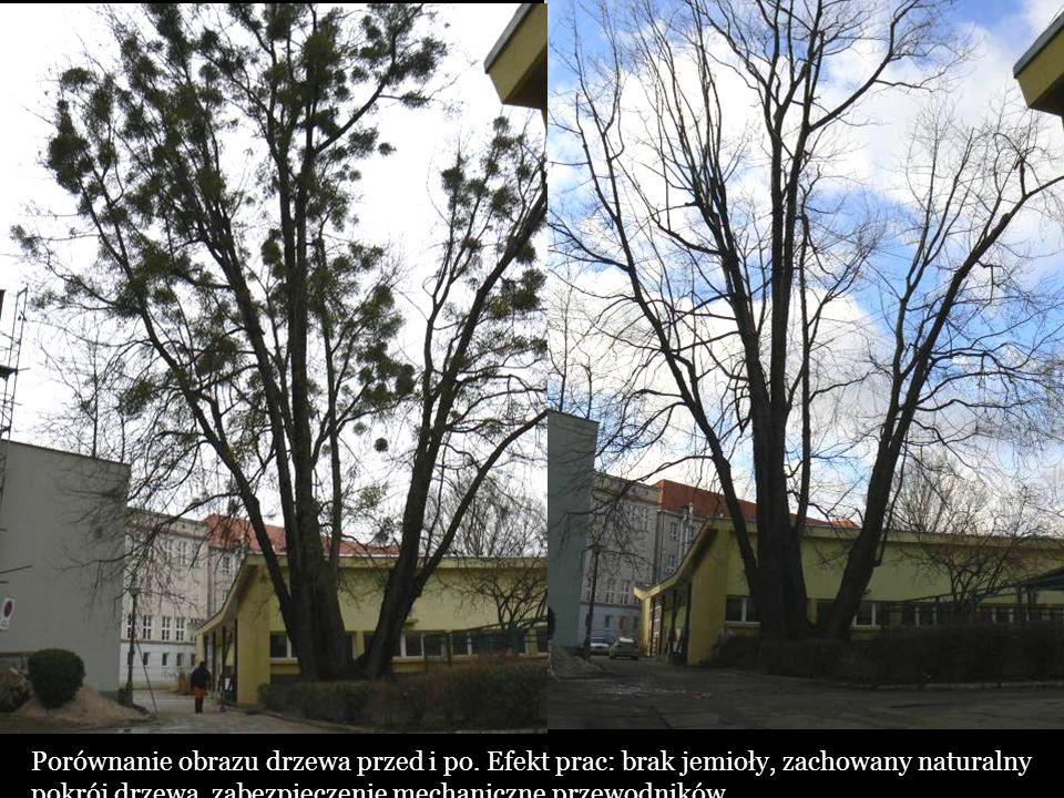 Porównanie obrazu drzewa przed i po