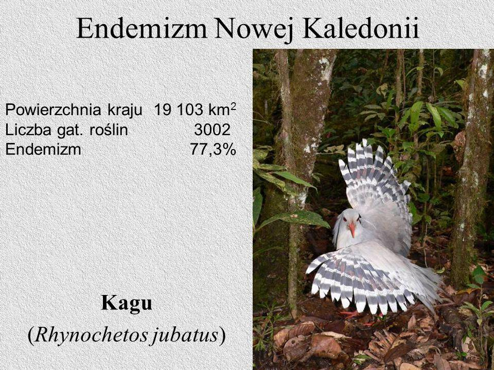Endemizm Nowej Kaledonii