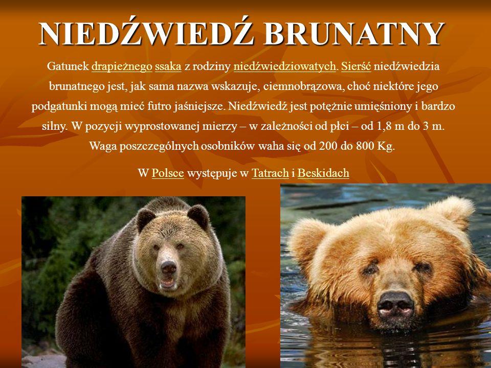 W Polsce występuje w Tatrach i Beskidach