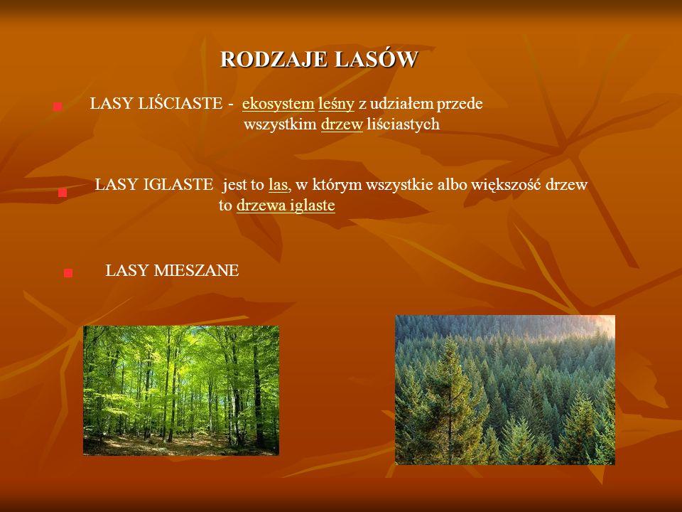 RODZAJE LASÓW LASY LIŚCIASTE - ekosystem leśny z udziałem przede wszystkim drzew liściastych.