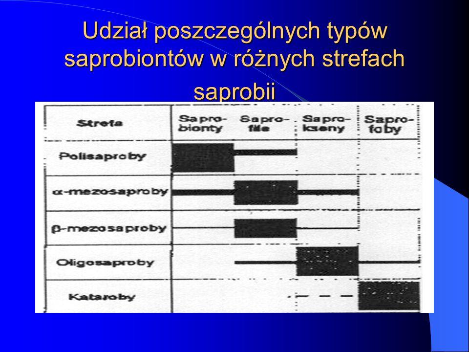 Udział poszczególnych typów saprobiontów w różnych strefach saprobii