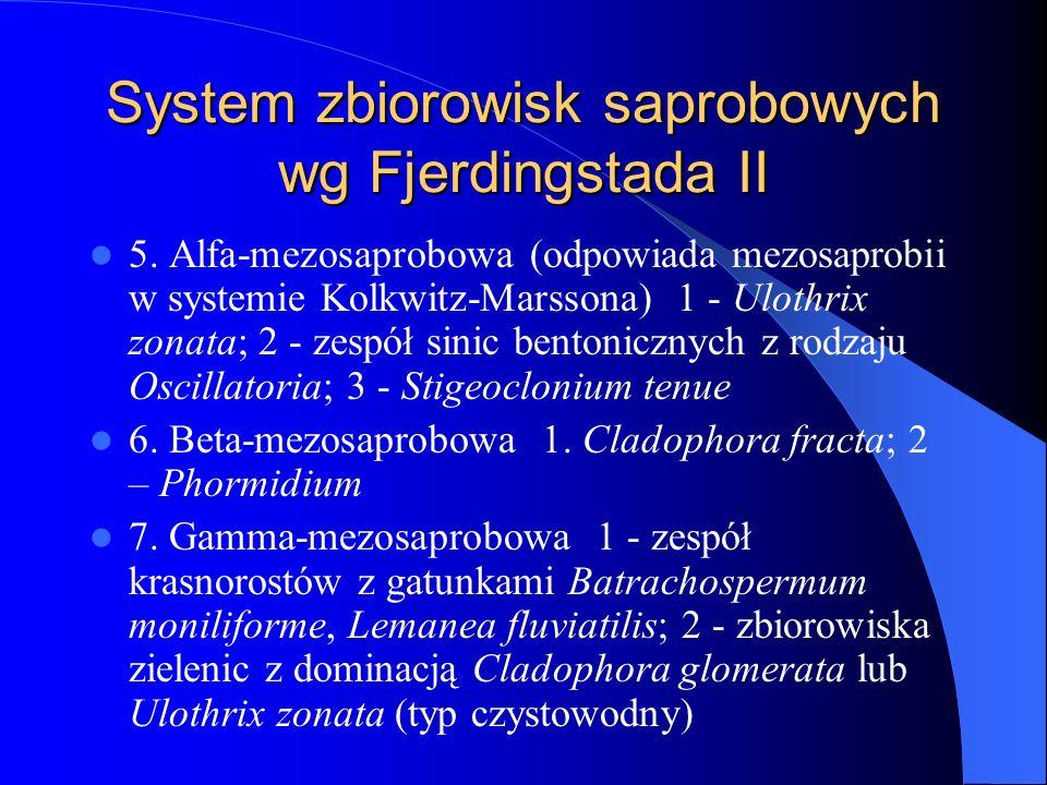 System zbiorowisk saprobowych wg Fjerdingstada II