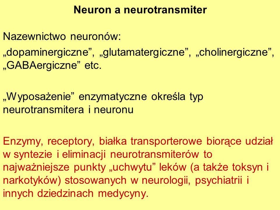 Neuron a neurotransmiter