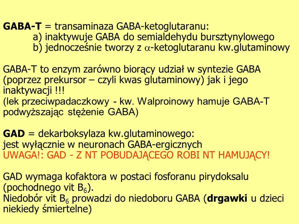 GABA-T = transaminaza GABA-ketoglutaranu: