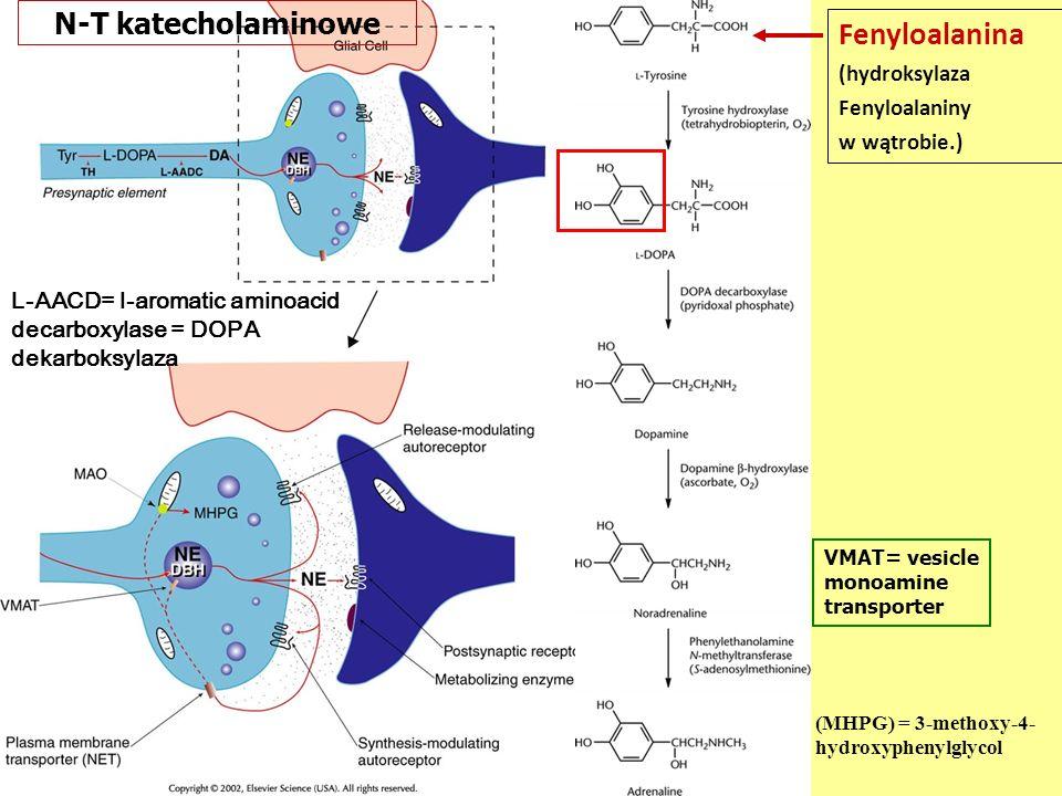 Fenyloalanina N-T katecholaminowe (hydroksylaza Fenyloalaniny