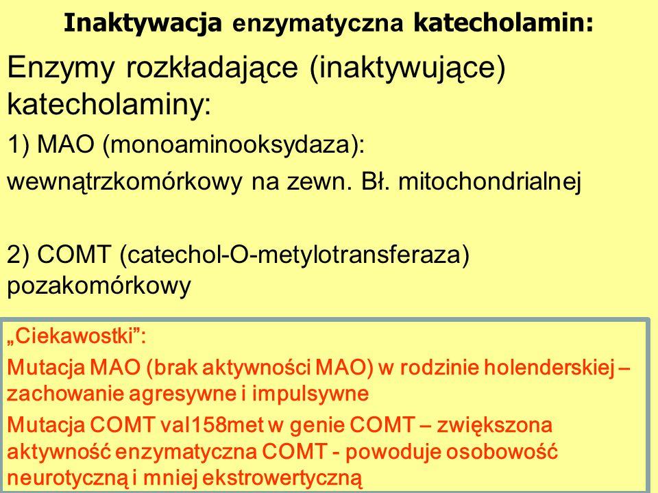 Inaktywacja enzymatyczna katecholamin: