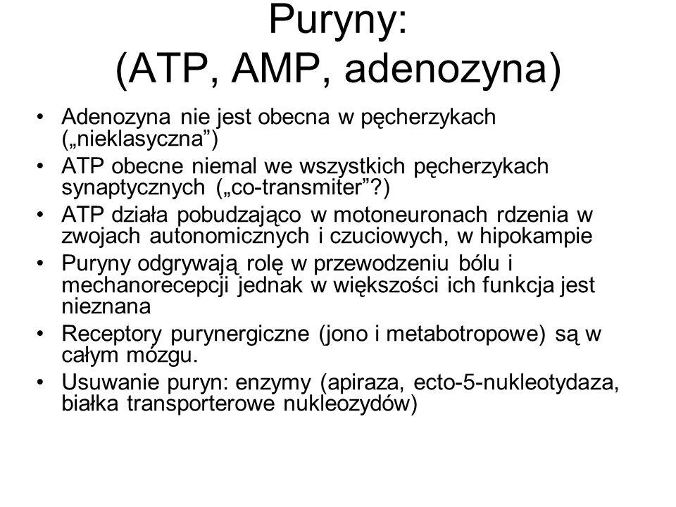 Puryny: (ATP, AMP, adenozyna)