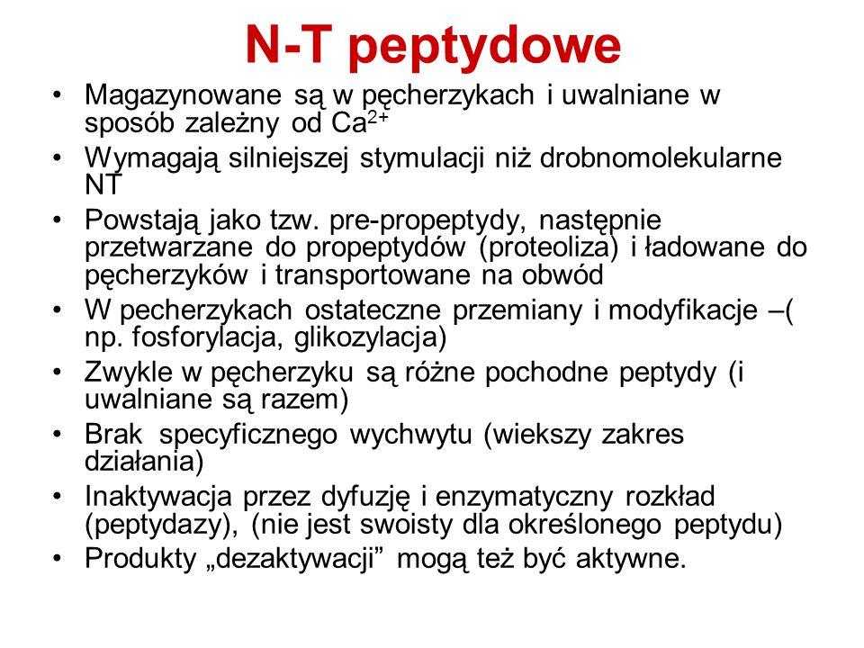 N-T peptydowe Magazynowane są w pęcherzykach i uwalniane w sposób zależny od Ca2+ Wymagają silniejszej stymulacji niż drobnomolekularne NT.